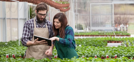 garden worker using tablet in greenhouse